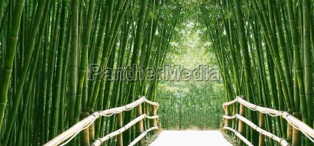 avenida de bambu